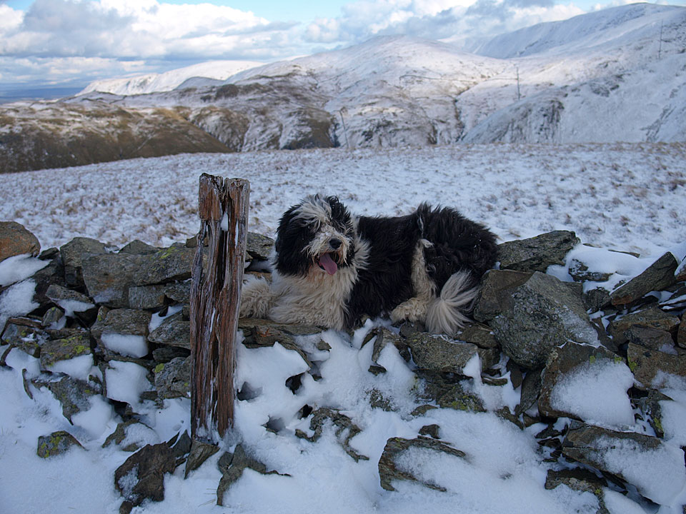 Casper next to the post that marks the summit