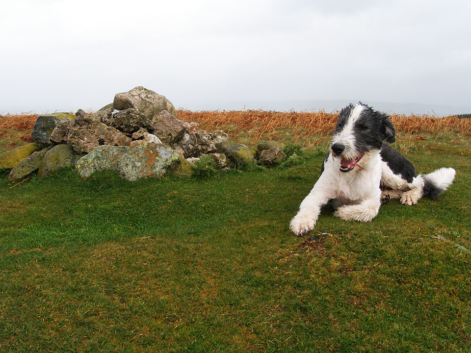On the summit of Heughscar Hill