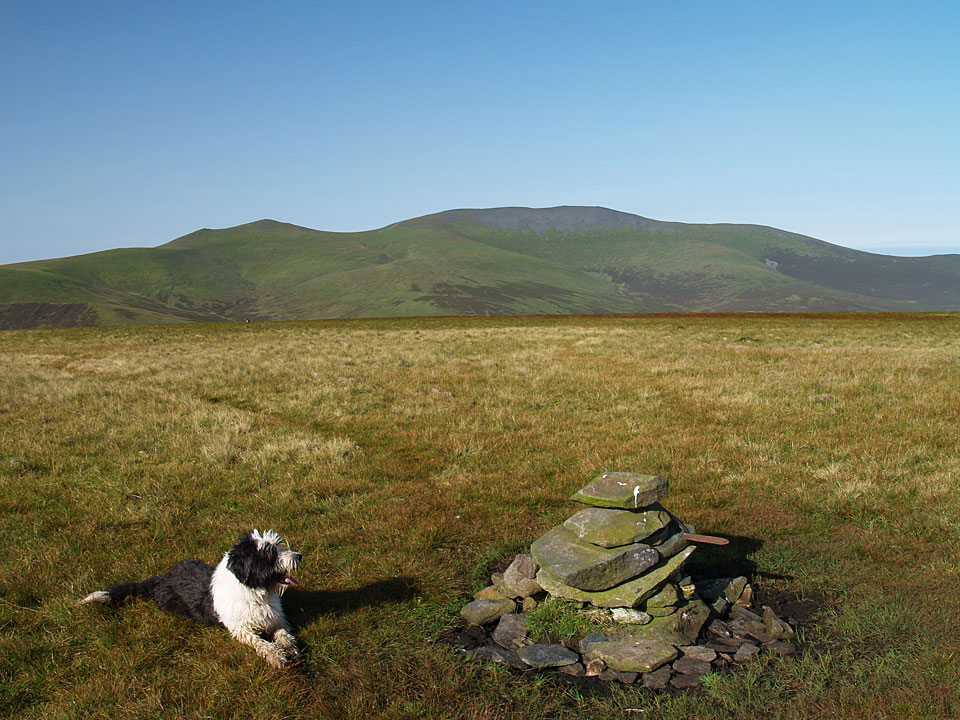 The grassy summit of Mungrisdale Common, with Skiddaw in the background
