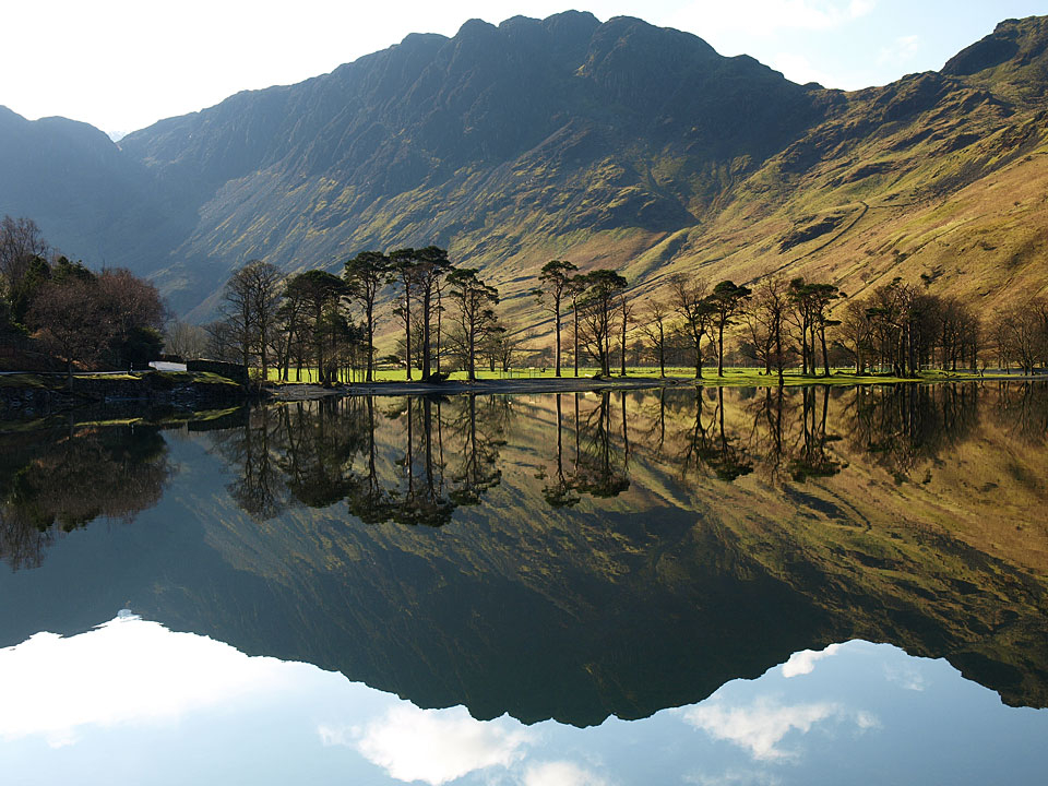 Haystacks and the Buttermere pines