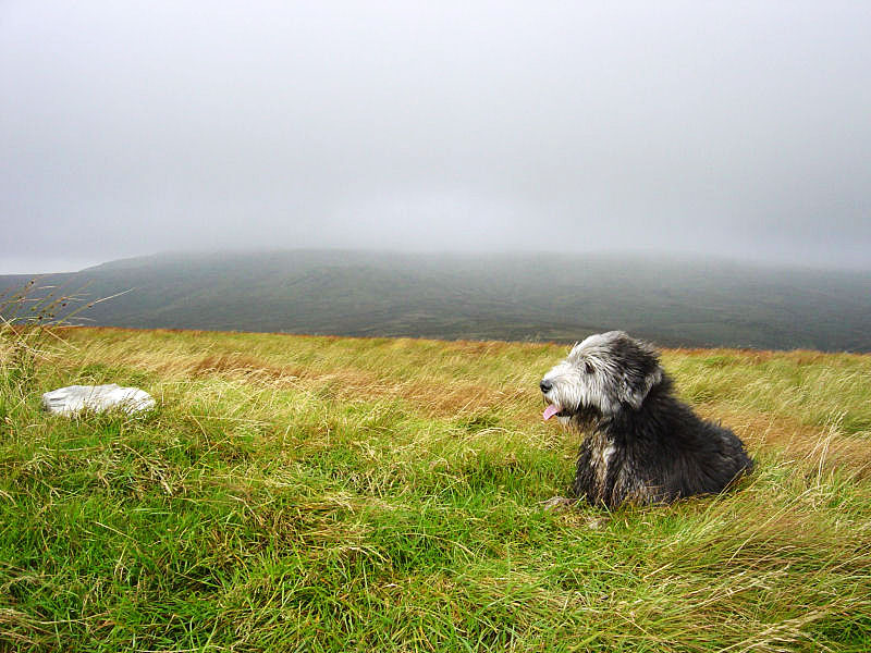 Angus eyes up the small cairn on Lord's Seat as the mist descends top the north over Harrop Pike and Sleddale Fell