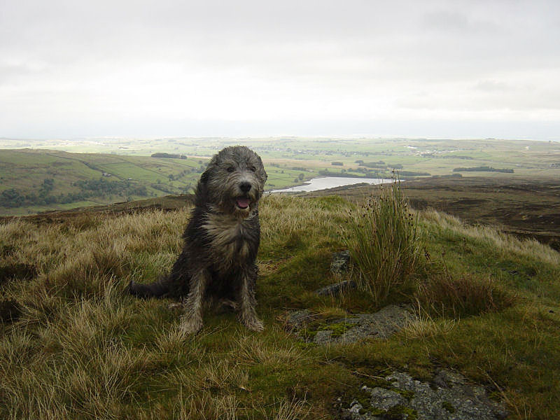 Angus on a windswept Sleddale Pike