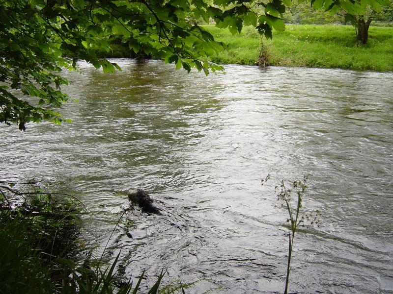 Duddon  - 2nd June 030