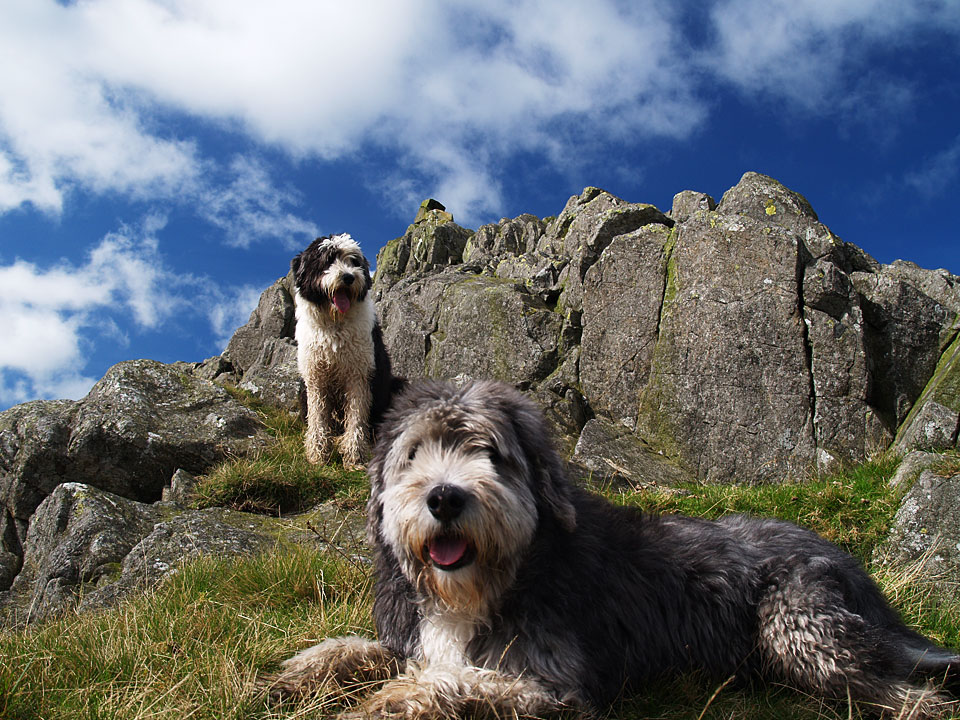 Dogs on Yoadcastle!