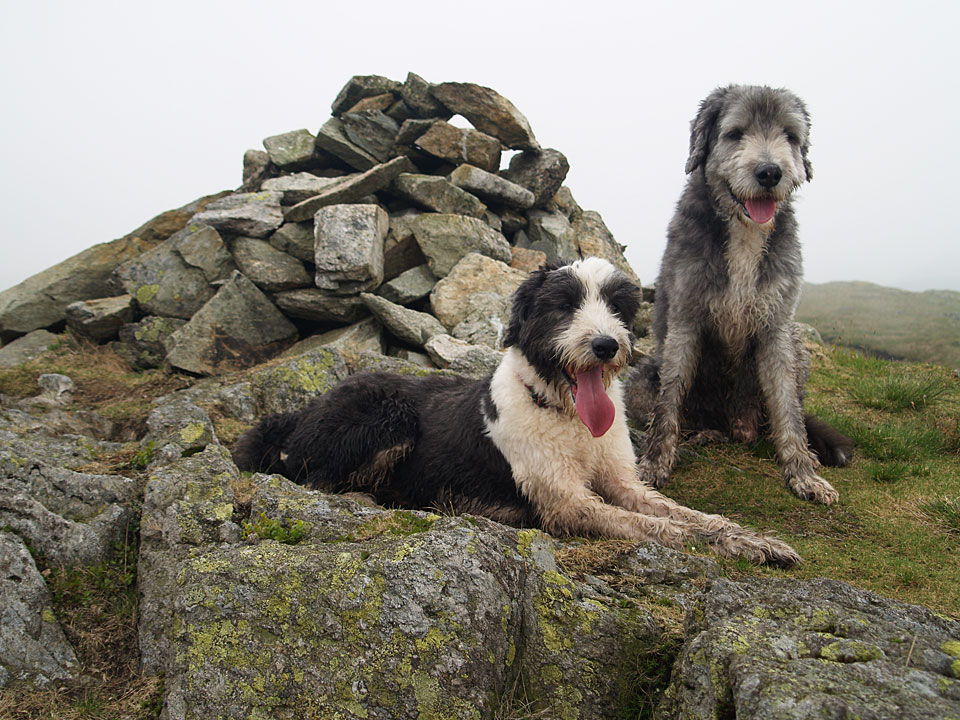 Casper and Angus on Grey Crag