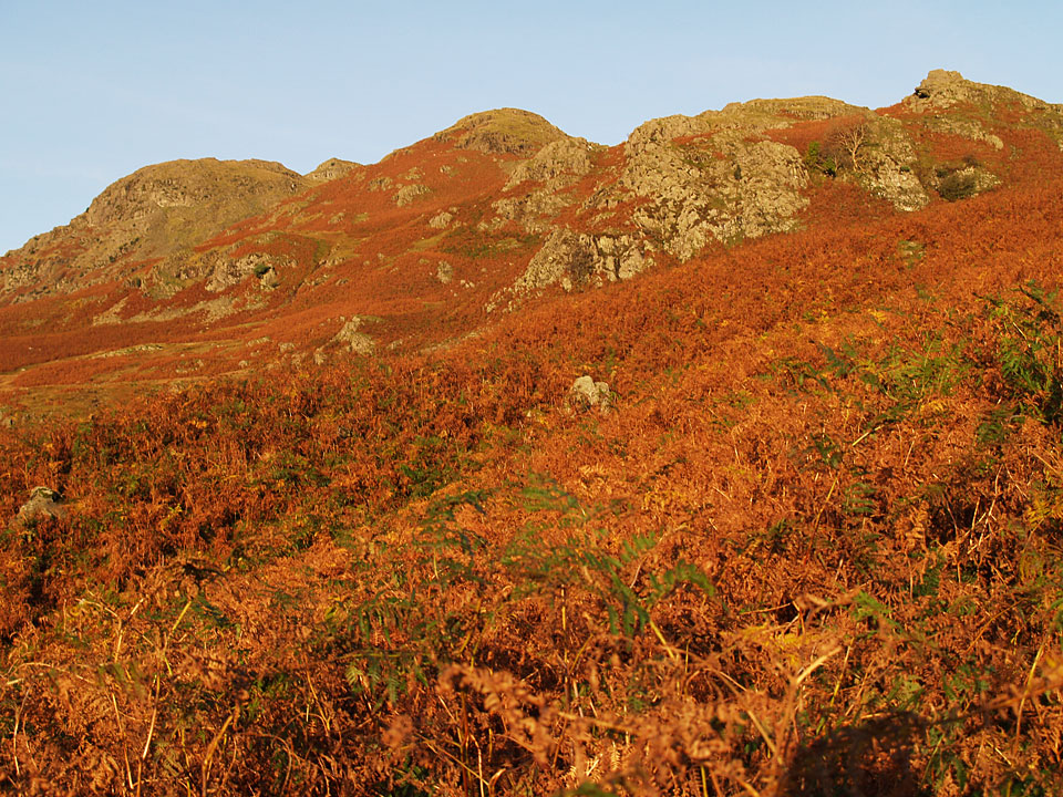 Beginning the climb of the Tarn Crag ridge from Easedale - the second peak from the left is the summit