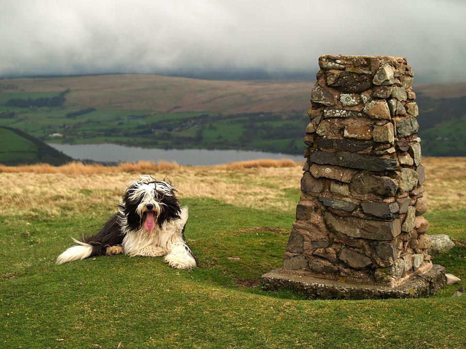 Casper at the summit of Little Mell Fell