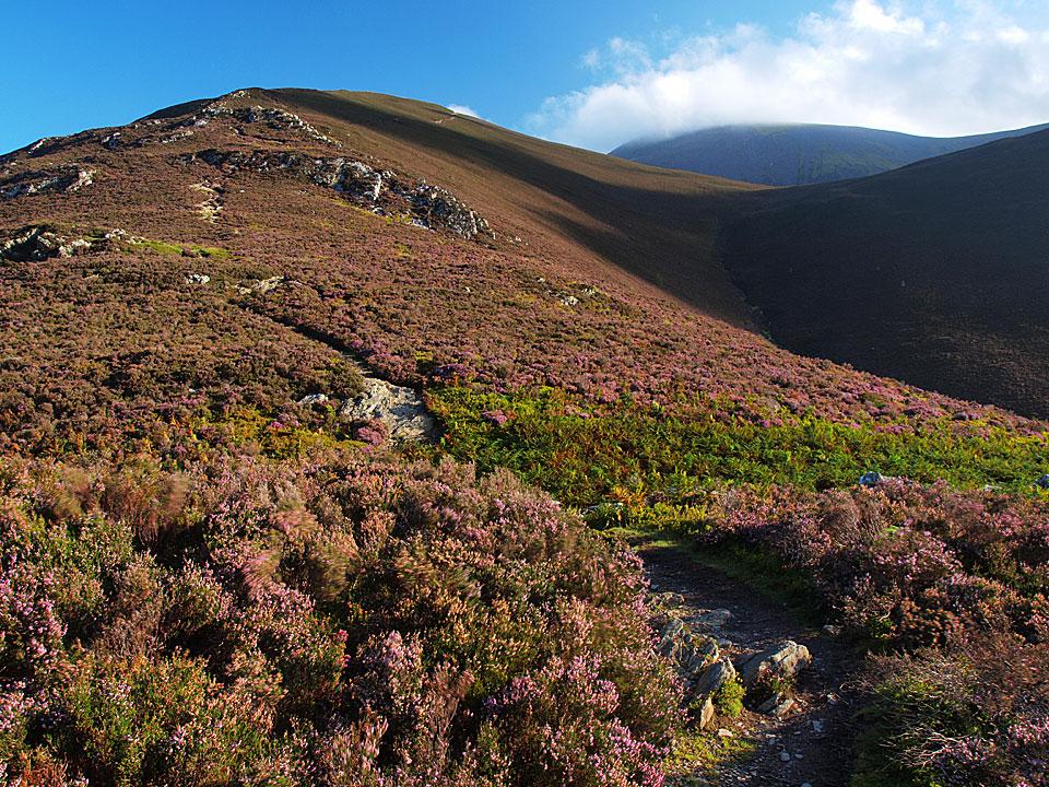 A heathery climb to Carl Side