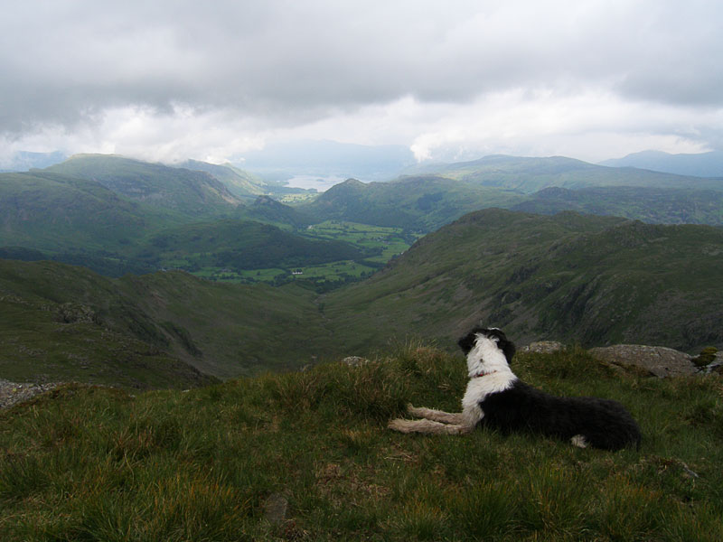 Casper has a look along The Combe and Borrowdale from Combe Head.