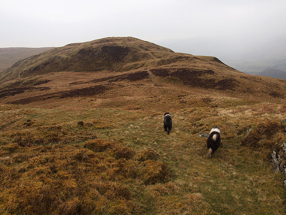 Heading for the north top of Low Fell