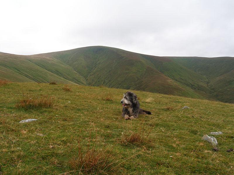 Angus on Hart Side, with Stybarrow Dodd behind