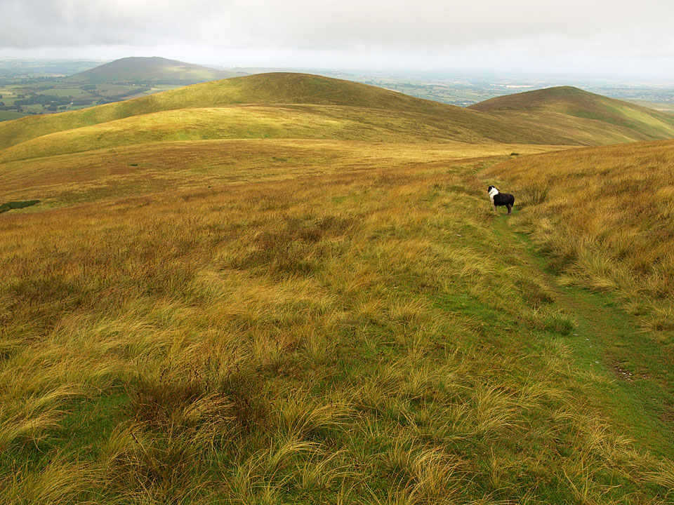 Lowthwaite Fell and Longlands Fell on the route from Little Sca Fell