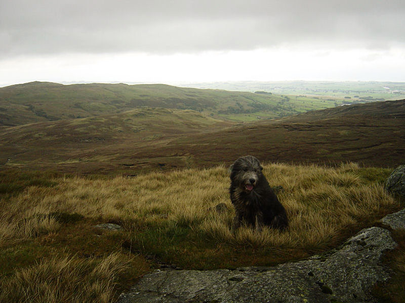 On the summit of Great Saddle Crag looking along the Wet Sleddale Valley