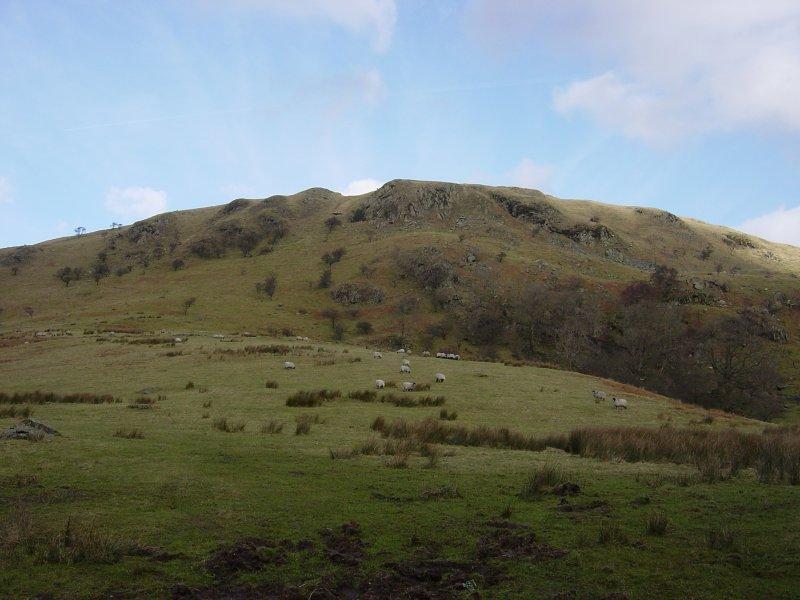 Lamb Pasture from Dryhowe Bridge