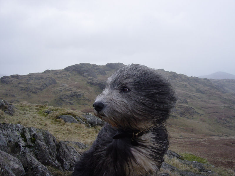 Windy on the summit of Yew Bank!