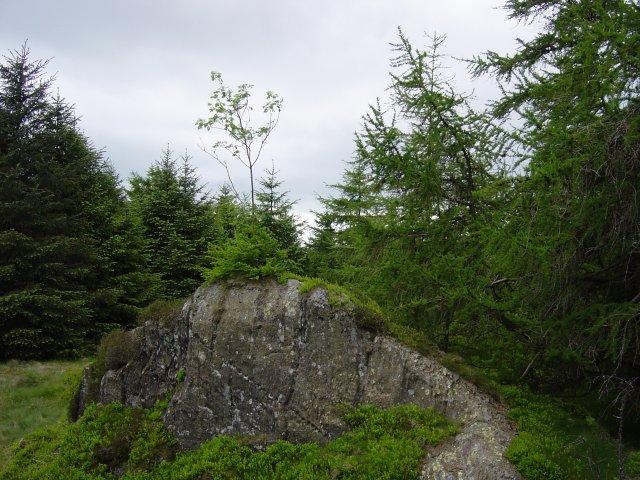 Birch Fell